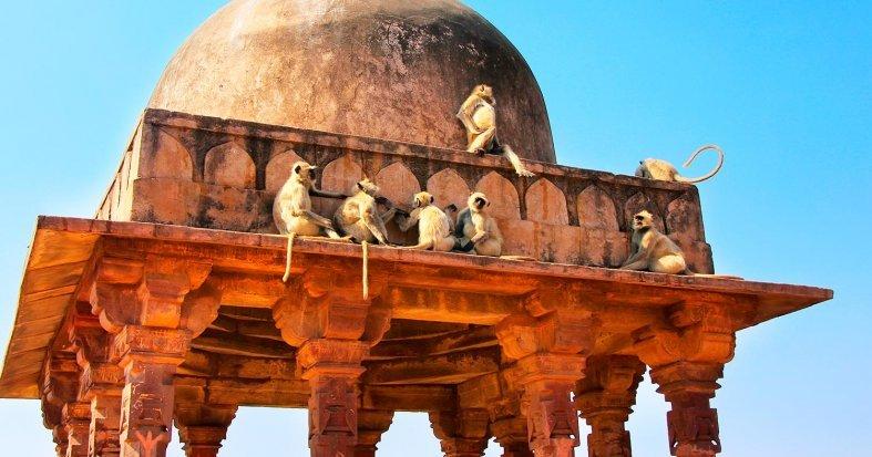 India Tours: Luxury Taj Mahal & Tiger Trail - Exoticca