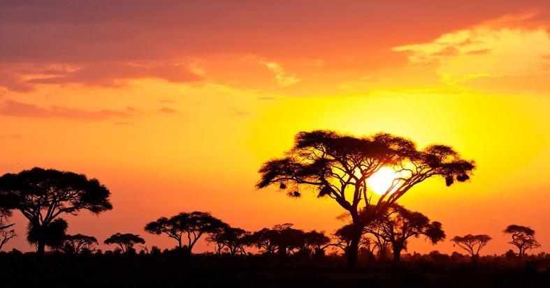 Single Acacia Tree at Sunrise, Masai Mara, Kenya скачать