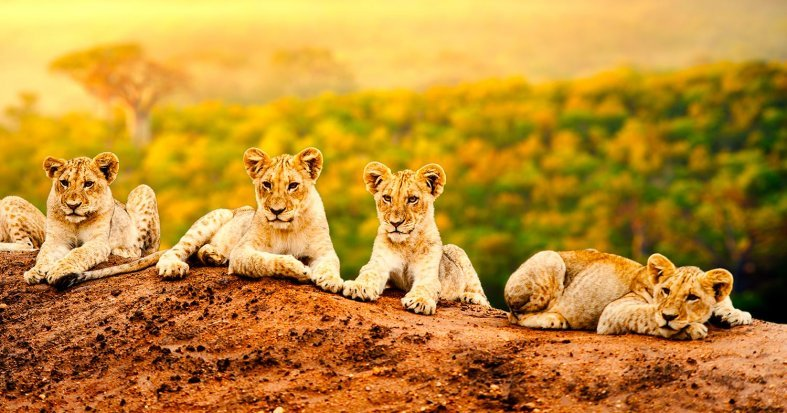 South Africa Tours: Kruger, Cape, Falls & All-Inclusive